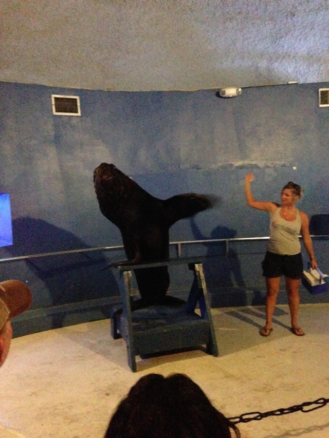 Franco the 600-lb. sea lion. He's waving at us.