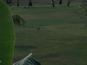 Lots of deer, too!